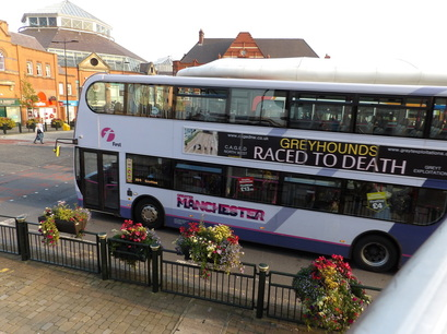 greyhounds raced to death bus