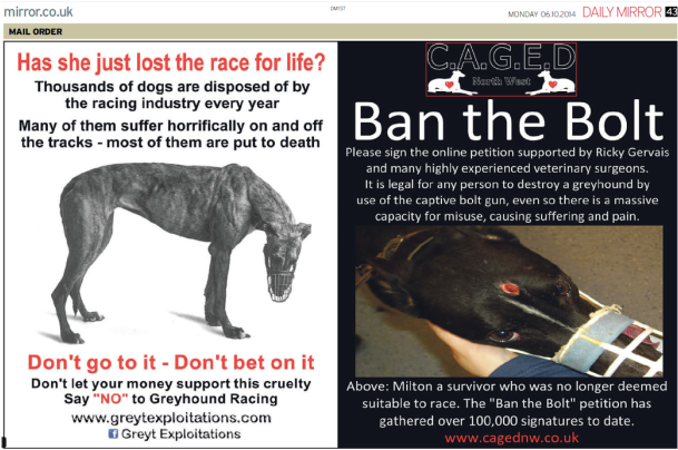 Mirror Ad Greyhounds