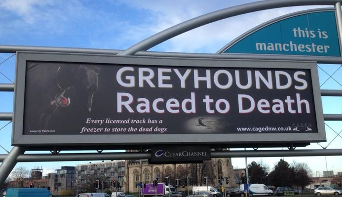 Greyhounds Raced to death